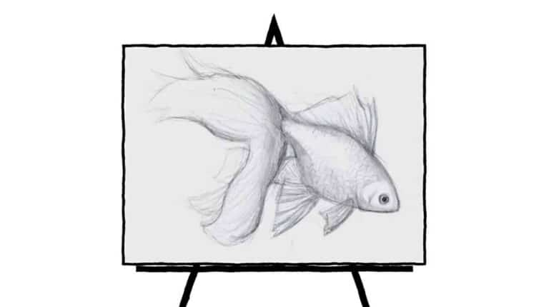 black and white image of goldfish sketch