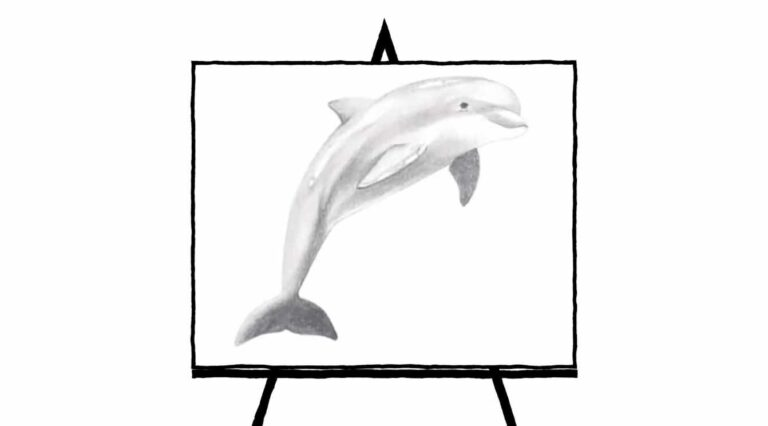 pencil sketch of black and white dolphin