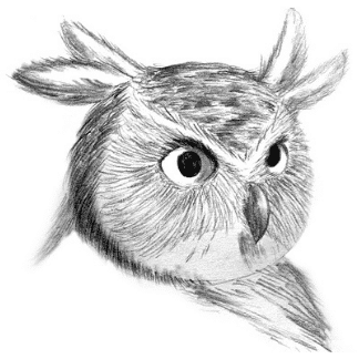 pencil drawn owl