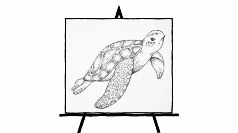 pencil sketch of sea turtle
