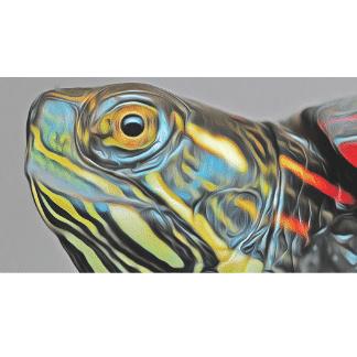 turtle head image